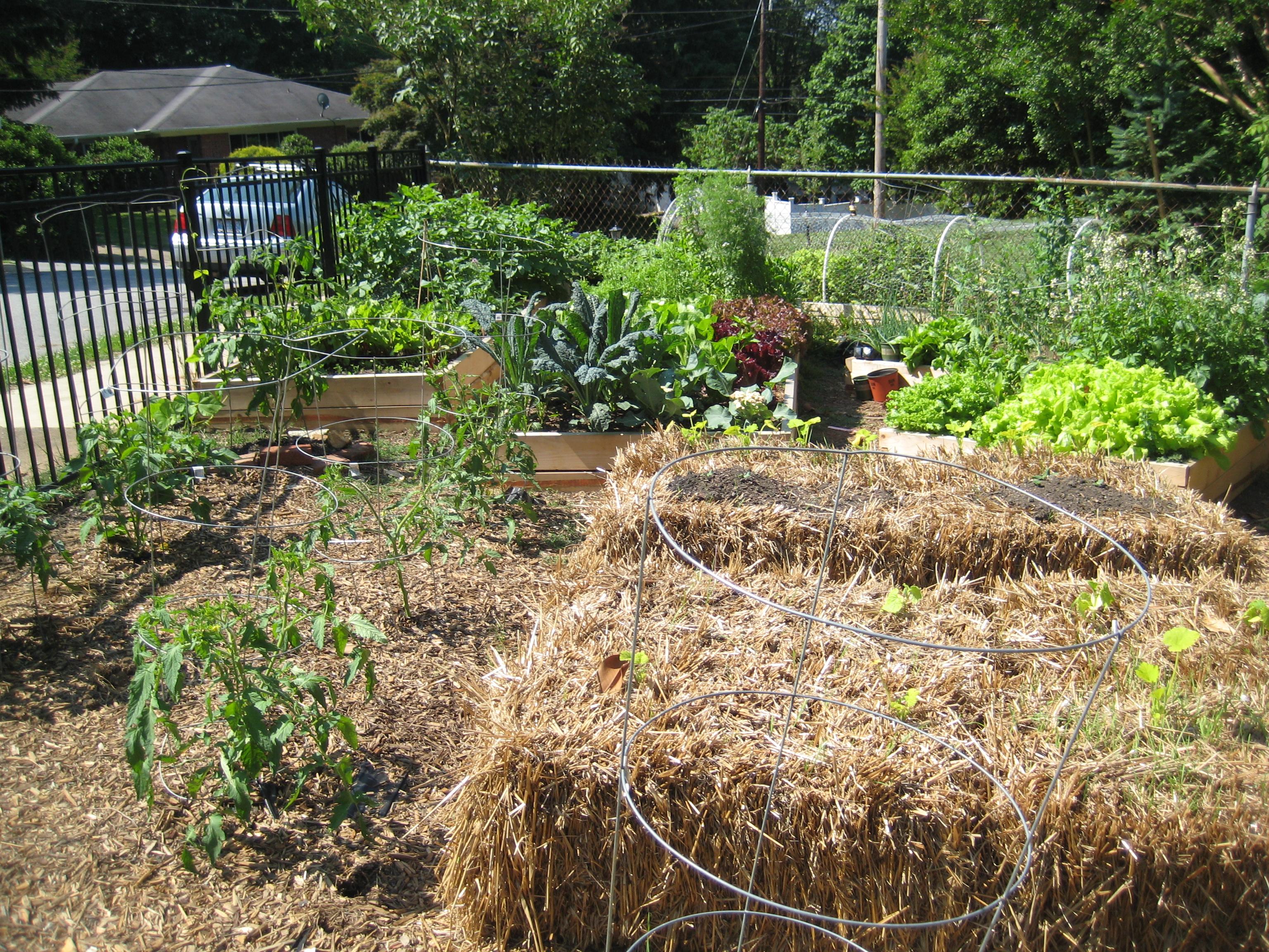 growing plants in hay bales Hay bales