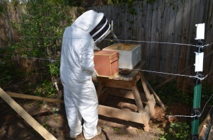 My brother getting ready to transfer bees